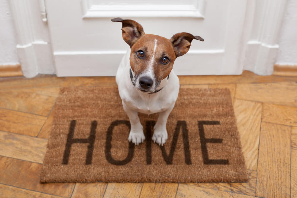 Are Hardwood Floors Bad for Dogs?