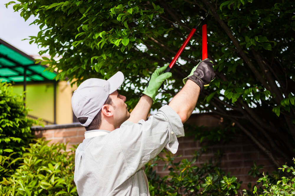 How to Trim an Apple Tree