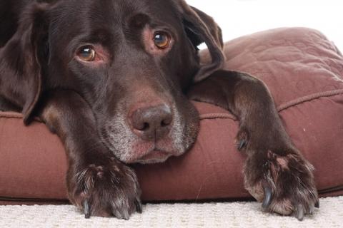How Do You Calm Down a Scared Dog?